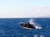 g-whale