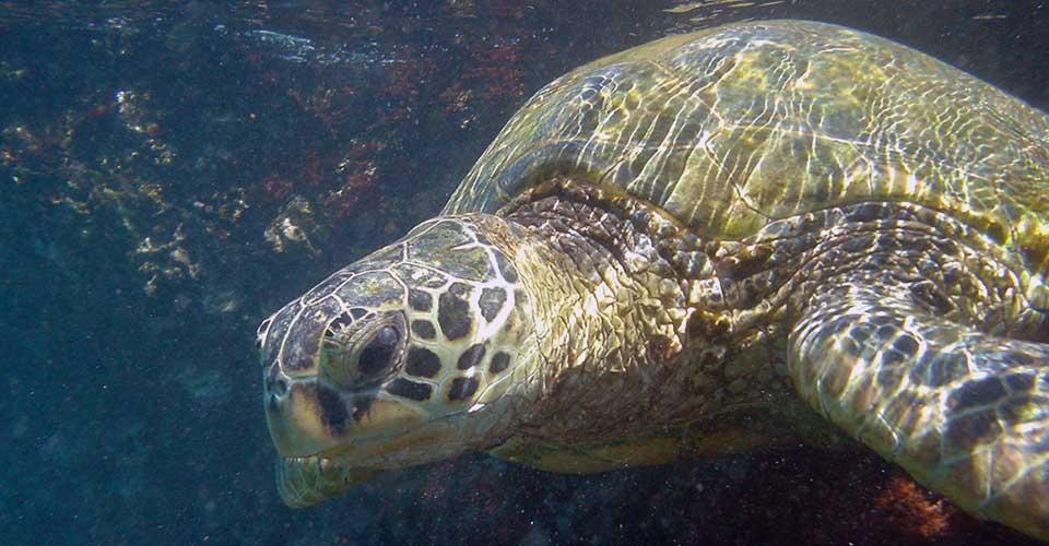 Slide 1 - Turtle